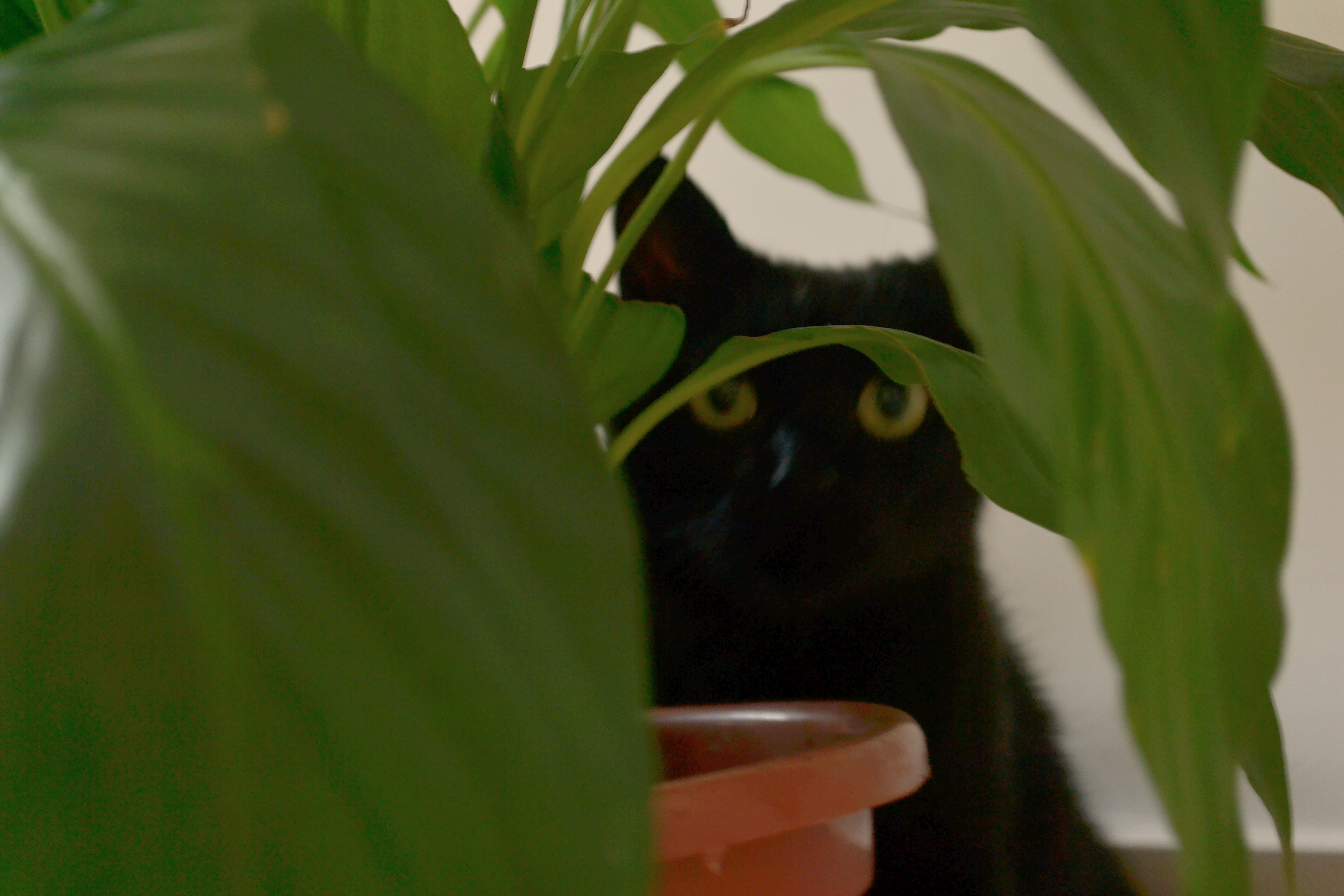 Jubi e a planta