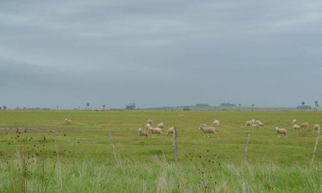 cropped-ovelhas.jpg